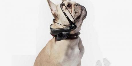 Un traductor de perro a humano