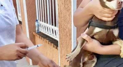 Campaña de vacunación para caninos y felinos con excelente respuesta en Jacona