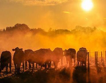 Advierten del mayor aumento de Dióxido de Carbono en la atmósfera en 800 mil años