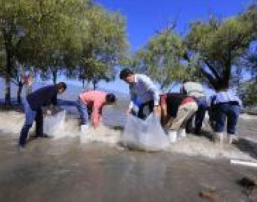 Resiembran miles de crías de peces en Chapala