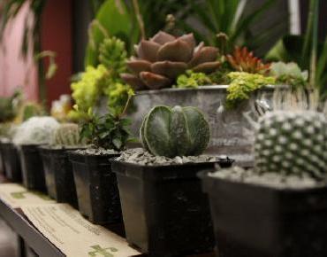 Crece la Floricultura de Jalisco