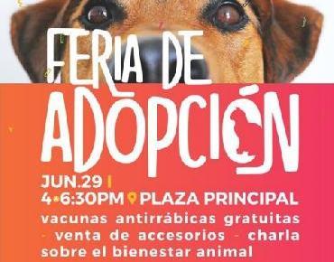 Llevarán a cabo en Zamora Feria de adopción animal