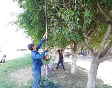 En Zamora realizan labores de rescate de zonas verdes en fraccionamiento El Campanario