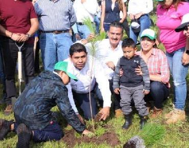 Plantaron michoacanos 290 mil árboles en 2019: Semaccdet