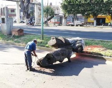 Retira troncos secos en el acceso oriente de Zamora