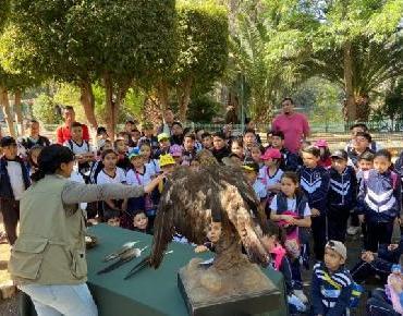 Celebra Zoológico de Morelia el día nacional del águila real