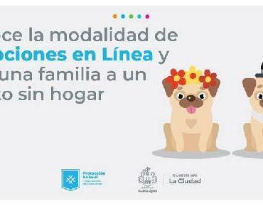 Adopta una mascota en línea en Guadalajara