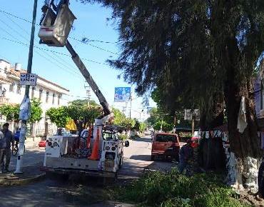 Continúa poda de árboles en calle Constitución