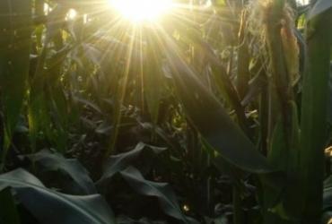Foro de Agricultura Sustentable en el Cultivo de Maíz en Zamora