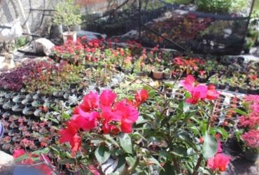 Vivero municipal de Zamora ahora reproduce arbolitos